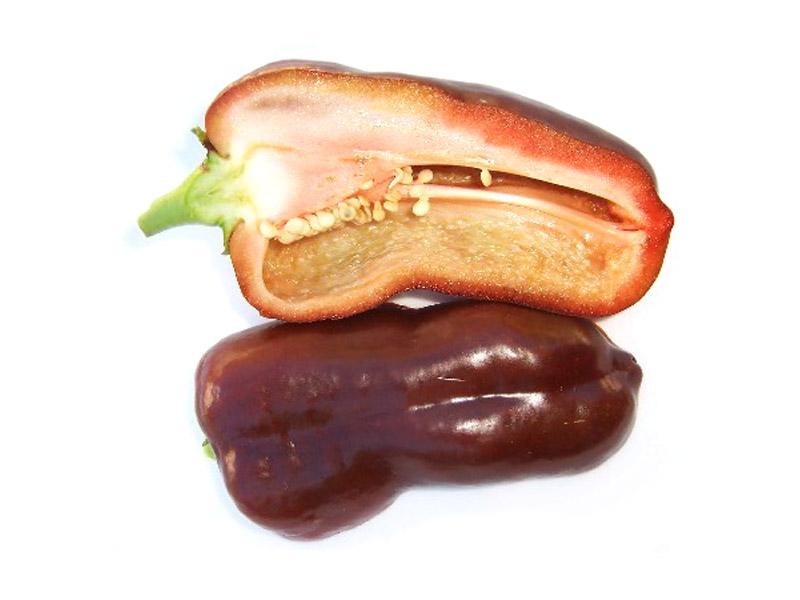Poivron Choco