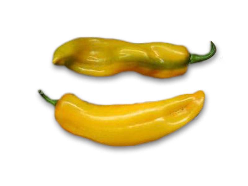 Poivron Corno di Toro Giallo (corno jaune)