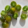 "Tomate Cerise Verte ""Green Grappe"""