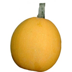 courge pomme d or