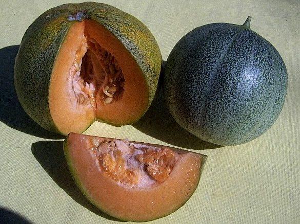 Melon Ananas à chair rouge